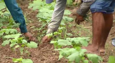 Fetagro acusa INSS de negar 80% dos benefícios solicitados por produtores rurais de Rondônia