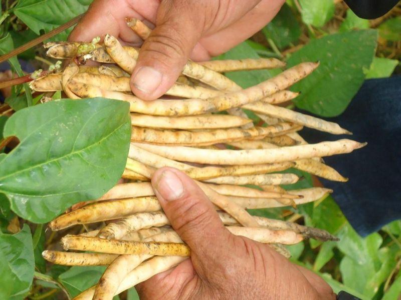 Qual é a real participação da agricultura familiar na produção de alimentos no Brasil e em Rondônia?