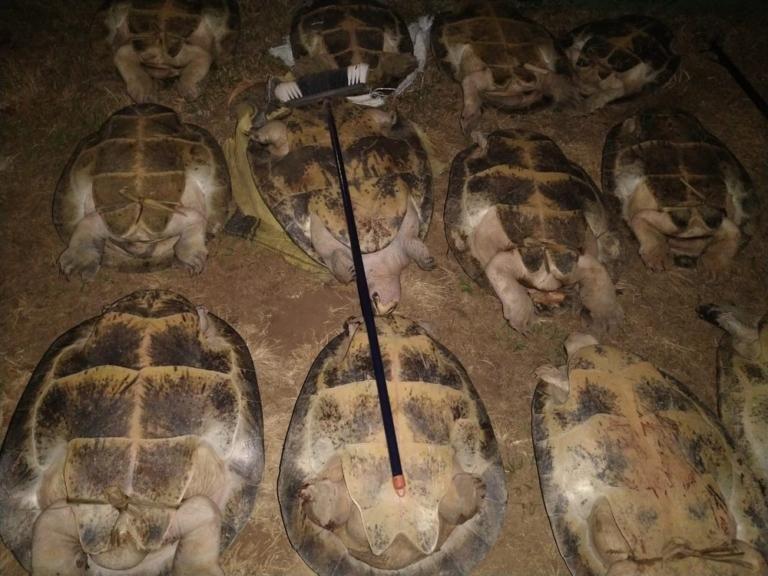 Quatro pessoas são detidas com 14 tartarugas e mais de 80 ovos em RO