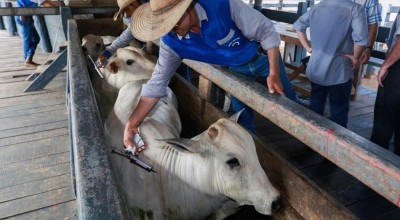 Vacinação já imunizou 166 milhões de animais