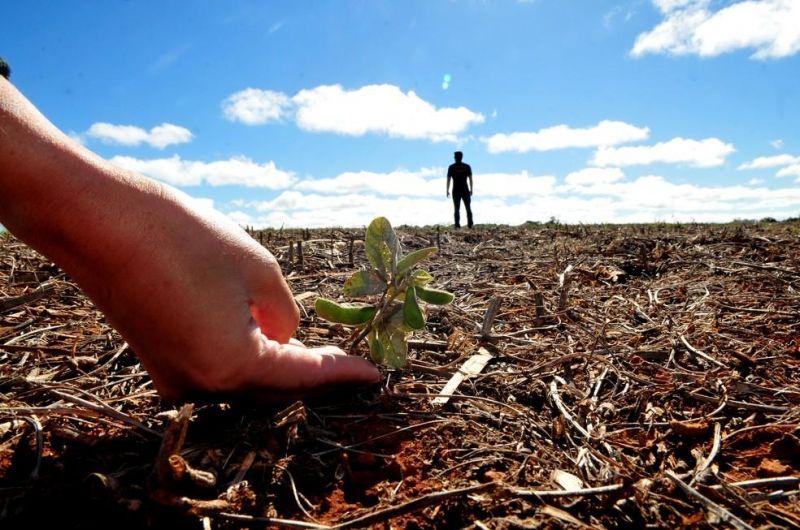 Vazio sanitário chega ao fim e produtores de soja já podem iniciar plantio em RO