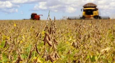67% dos municípios de Rondônia já cultivam soja, revela IBGE