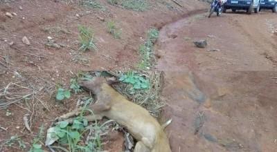 Adolescente pega espingarda do pai e mata cachorro do vizinho a tiros em Rondônia