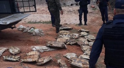 Mais de 50 tartarugas são resgatadas durante fiscalização ambiental em RO