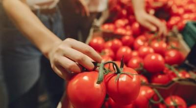 Produção de tomate quase triplica em Rondônia, mas feijão tem queda de 15%