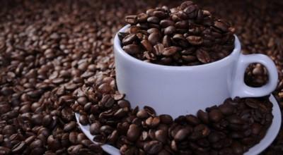 Produtores apostam em clones de café robusta e colheita por hectare aumenta 90% em RO