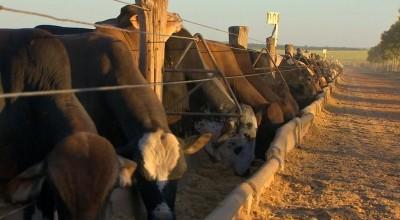 Preço do boi gordo dispara e arroba chega a R$ 254 em Rondônia