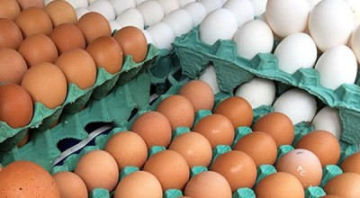 Produção de ovos de galinha bate recorde no 3º trimestre