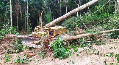 Operador morre após árvore cair em cima de trator na zona rural de Guajará