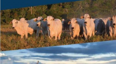 Grãos, café e pecuária são destaques da 1ª edição do Informativo Agropecuário de Rondônia de 2021