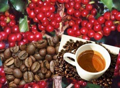 Projeto estadual de avaliação de clones de café viabiliza melhoramento genético