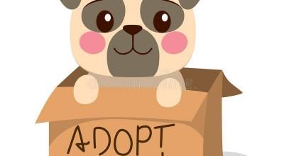 Cãozinho resgatado em Rolim de Moura necessita de família adotiva