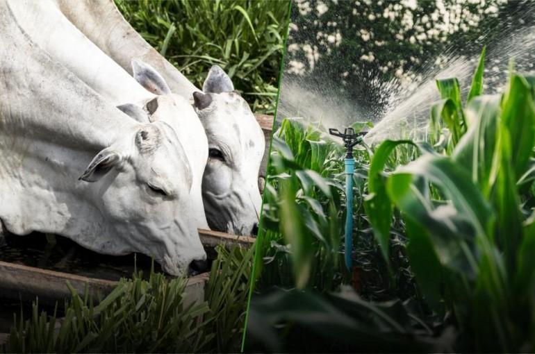Mais Água, Mais Desenvolvimento: Linha de crédito do Sicredi visa melhorar qualidade de vida em propriedades rurais