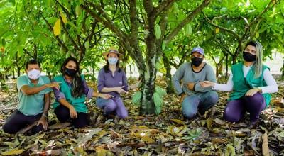 Projeto de Cacau ensina a produtores técnicas de renovação da lavoura para uma melhor produção