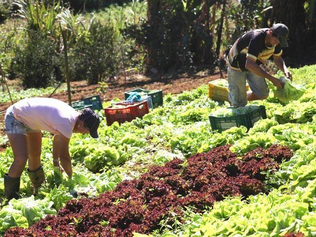 Câmara aprova medidas de auxílio a agricultores