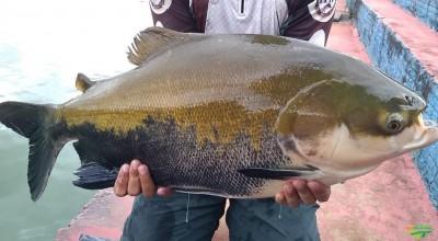 """Programa """"Peixe saudável"""" atende piscicultores com laboratório móvel em Vilhena e Colorado"""