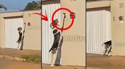 Cachorro é filmado tocando campainha