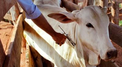 Idaron leva orientação a produtores rurais e reforça ações de combate a raiva