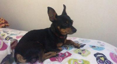 Cachorro encontrado em Rolim