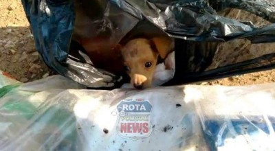 Garis encontram cachorrinho dentro de saco de lixo 17 em Vilhena