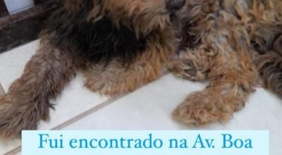 Cachorro perdido é encontrado em Rolim de Moura e procura seus donos