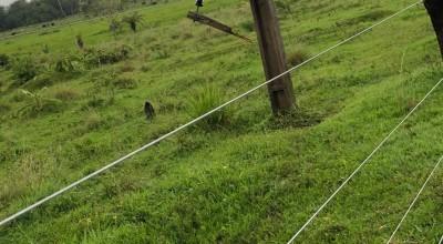 Cabo de alta tensão cai e mata 11 animais em sítio de pequeno produtor rural