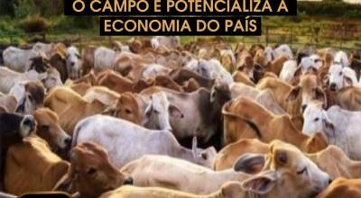 Dia nacional da Pecuária, uma homenagem do Frigoisa
