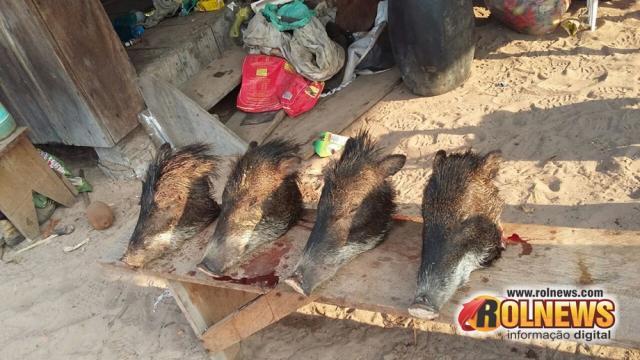 Chupinguaia:Polícia encontra animais selvagens mortos e várias armas em sítio