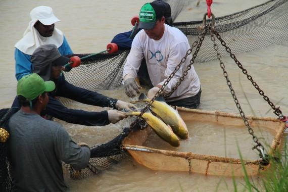 Feira de Peixe da Amazônia deve atrair 10 mil pessoas em Ji-Paraná no mês de outubro