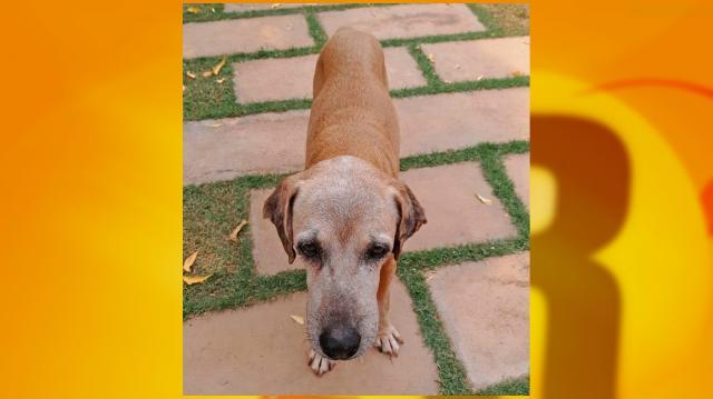 Utilidade Pública: Cadela desaparecida próximo a prefeitura, em Rolim