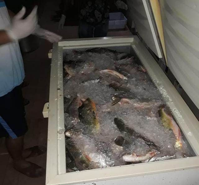 600 Kg de peixes são apreendidos pela Polícia Ambiental em RO