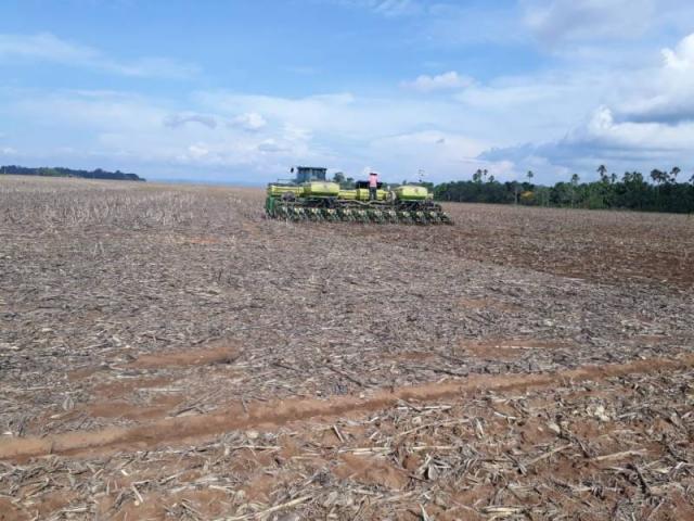 Apesar de dólar baixo e guerra comercial americana, produtores esperam boa safra de soja em Cerejeiras