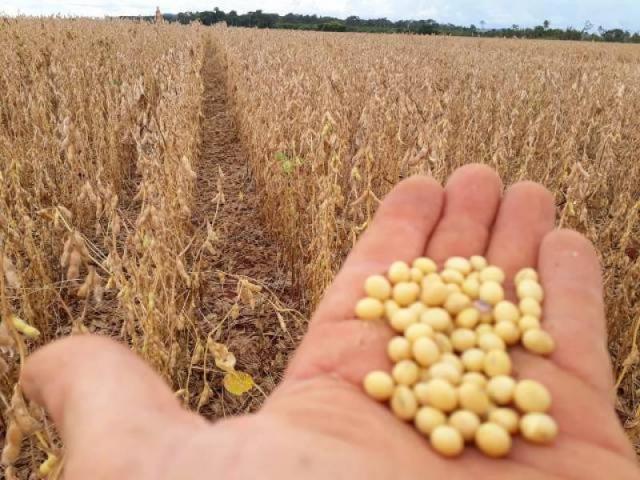 Preocupados com clima e preço, agricultores estão em plena colheita de soja na região de Cerejeiras