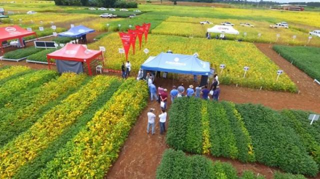 Apresentando inovações da ciência, dias de campo atraem produtores e profissionais do agronegócio em Cerejeiras
