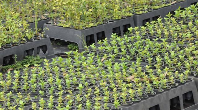Curso Agroflorestal: Áreas começam a ser implantadas
