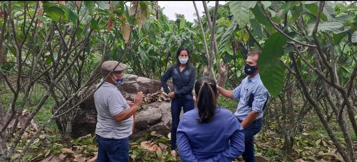 Cacauicultura de Rondônia avança no processo para ter Indicação Geográfica