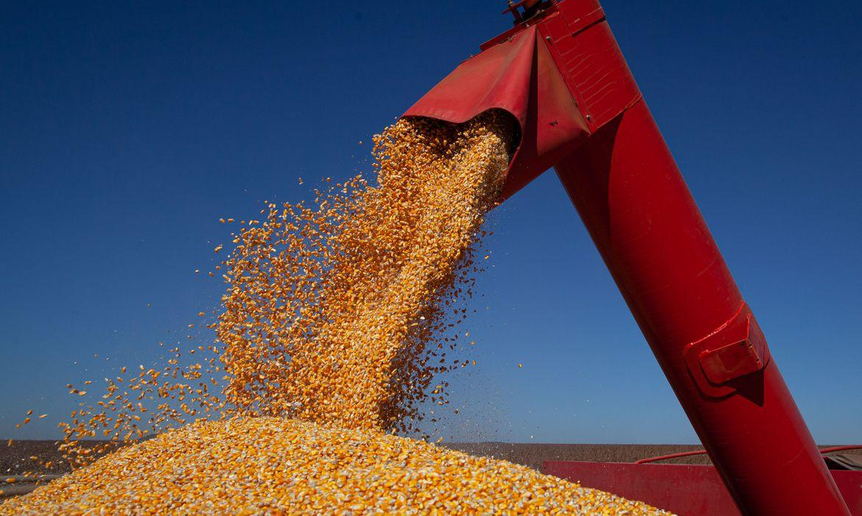 MILHO: Mesmo com colheita, março é marcado por preços recordes