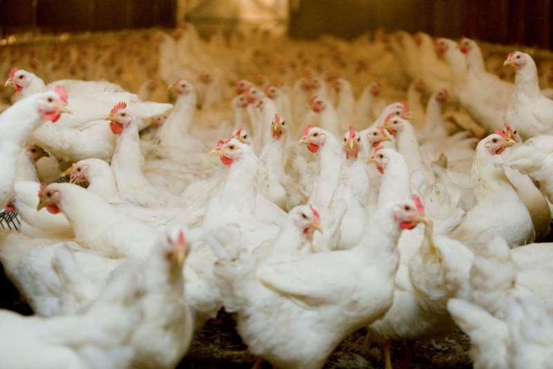 Exportações de carne suína registram maior volume mensal