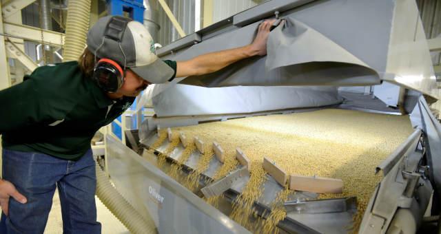 A Produção de grãos pela primeira vez deve superar 270 milhões de toneladas