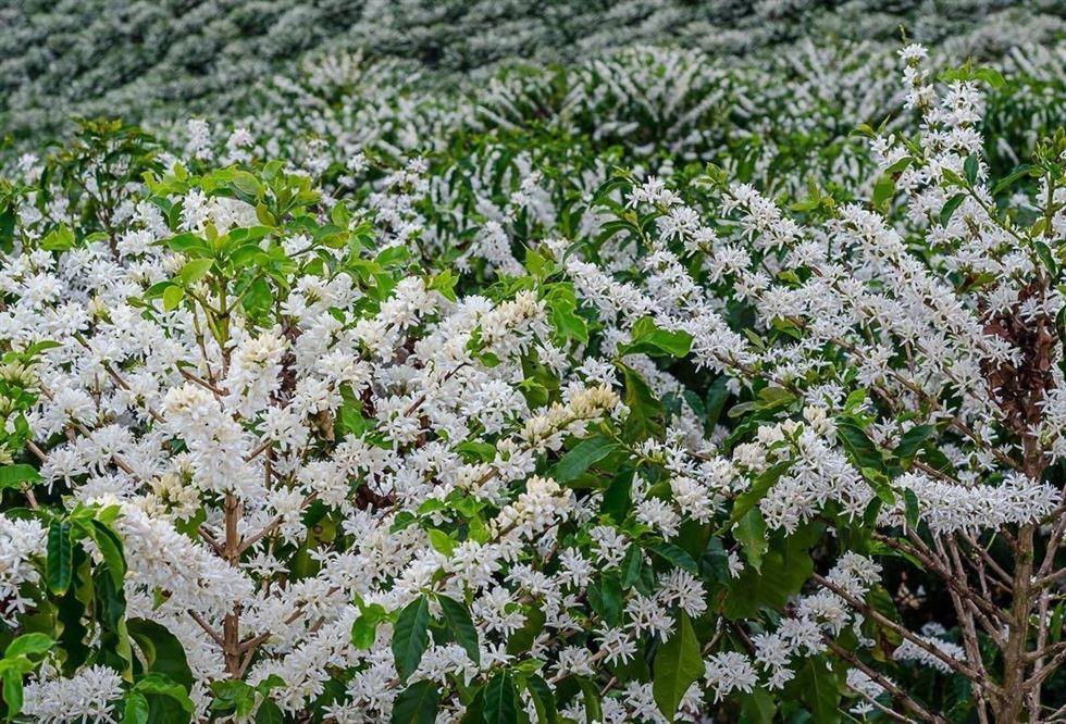 Produção agrícola de Rondônia é debatida no Ministério da Economia